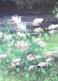紫 李鳥のイラスト
