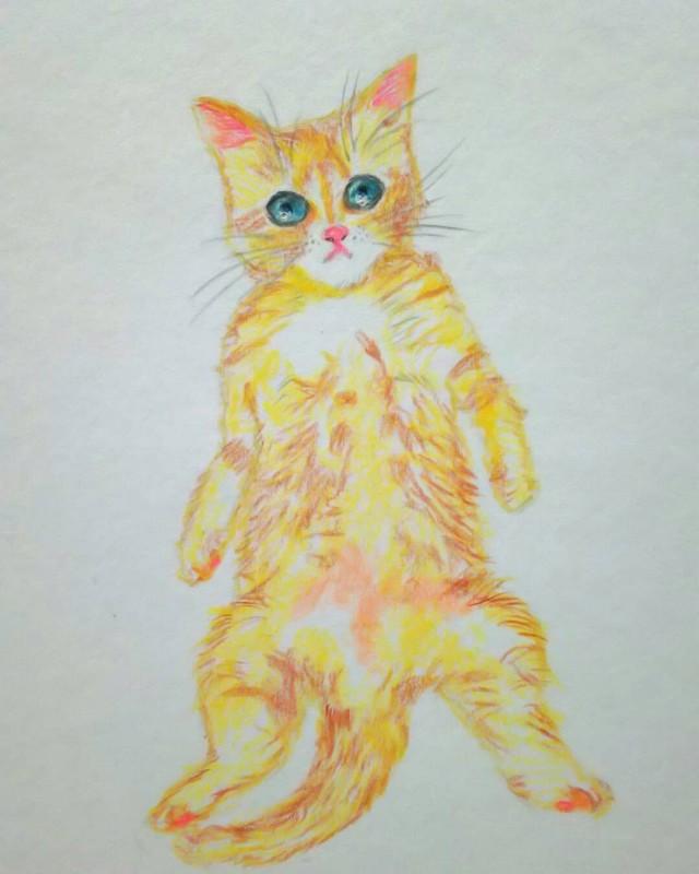 黄色に近い茶色子猫作品詳細illustdays シンプルイラストポートフォリオ